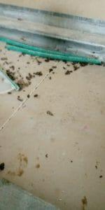 קקי של עכבר בבית- זיהוי מהיר באמצעות תמונה לקקי של עכבר